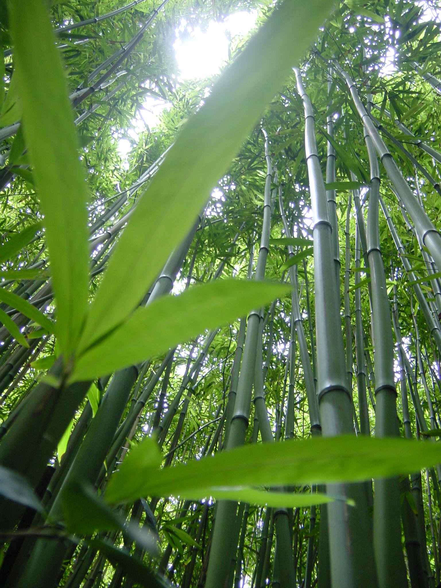 Bambou naked 883
